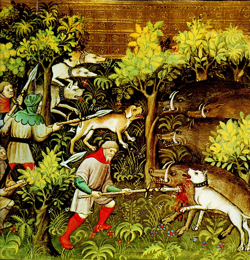 The boar hunting