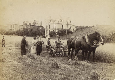 The most farmers still used good old horses